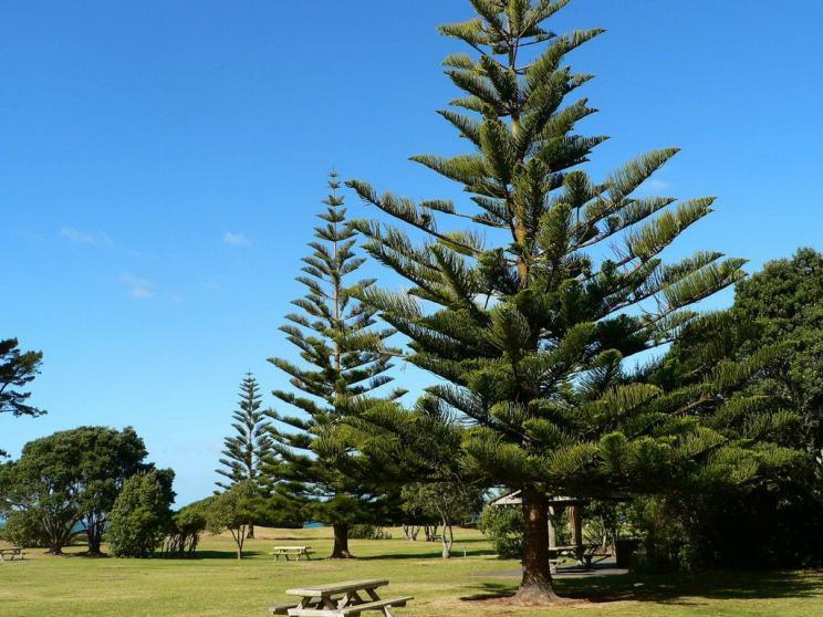 新西兰旅游景点,新西兰景点,北岛,奥克兰,奥克兰景点,长湾地区公园