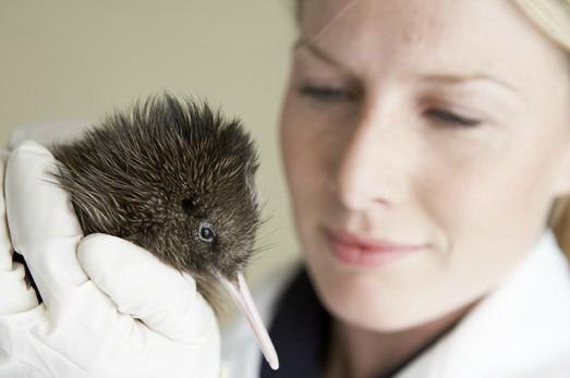 柳岸野生动物保护区是位于坎特伯雷地区基督城的一个美丽且历史悠久的自然保护区,(自1974年开放至今),一直致力于保护新西兰的濒危动物(如:几维鸟/奇异鸟)。它是新西兰重要的几维鸟繁育基地之一。 柳岸野生动物保护区是一个可以让游客了解和近距离观赏新西兰独特的野生动物的景点。这里还拥有一个可以观赏非本土动物的区域,其中包括典型的新西兰农场喂养动物。柳岸野生动物保护区为在保护和繁殖濒危动物方面做出的努力而自豪。 柳岸野生动物保护区由新西兰野生区、新西兰遗产区以及新西兰自然区三部分组成。保护区内拥有100多种,超