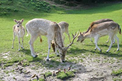 天堂谷温泉野生动物园