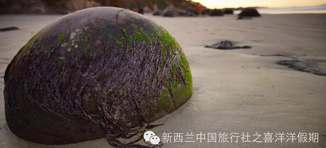 【行摄直播】冬日南岛全景美食6日全记录(五、由西向东)